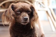 Gina (NadineLange) Tags: dog dogs animals canon eos hund 500d