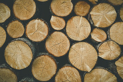 Logs (NIOphoto.) Tags: wood abstract tree vintage wooden log nikon pattern logs tokina marks minimalism
