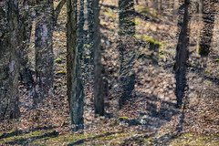 Park Life 31 (pni) Tags: park tree grass suomi finland helsinki dof bokeh multipleexposure trunk helsingfors tripleexposure multiexposure lapinlahti skrubu pni lappviken pekkanikrus