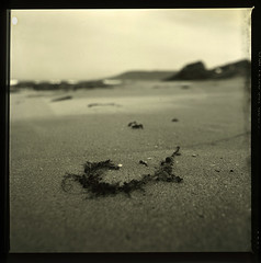 Hooked (LunaliteSBC) Tags: seaweed 6x6 film beach australia slide victoria bronica filmcamera nikkor ilford lorne beachwalk 75mm nikkorlens bronicas2a ilforddeltapro100 transparecy blackandwhiteslide 6x6slide filmphotographyproject reversalprocessed