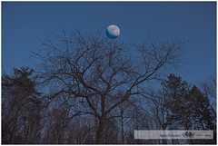 APRIL 2016  NM1_8780_011584-22 (Nick and Karen Munroe) Tags: sunset moon ontario canada nikon munroe moonrise moonlight nightsky brampton moonshot heartlake nickandkaren karenandnick moonlitsky heartlakeconservationarea munroephotography nikon2470f28 munroedesignsphotography munroedesigns karenick karenick23 nickmunroe nikond750 nickandkarenmunroe karenandnickmunroe karenmunroe