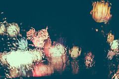 Blossoms in the rain (andidrew) Tags: digital 50mm nikon taiwan taichung af nikkor ai 50mmf14 50mmf14d d700 135digital nikonnikkordlens