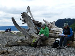 What route back? (Ramona H) Tags: driftwood whidbeyisland pugetsound alaspit whicbey