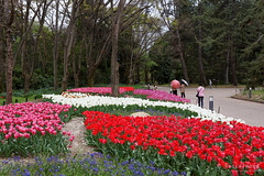 20160413-50-Spring flowers (Roger T Wong) Tags: travel flowers holiday japan kyoto tulips canonef1740mmf4lusm botanicgardens 2016 canon1740f4l canoneos6d rogettwong