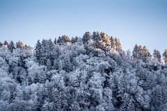 The Great Smokey Mountains (tshabazzphotography) Tags: trees snow mountains nature frozen photographer tennessee gatlinburg weeks flickrlove naturelovers smokeymountains coldday canonphotos landscapephotographers canonofficialcanonpicturesflickr
