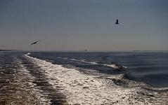 boat ride to sapelo island ga. (bluebird87) Tags: ga island boat nikon shrimp epson n80 seabirds sapelo 4490 dx0