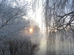Early wintermorning (manonvanderburg) Tags: trees winter white mist nature sunrise pond nevel frost serene wonderland damp icecold sprookje rijp