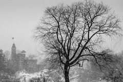 A Tree in Winter (CVerwaal) Tags: trees winter blackandwhite snow centralpark belvederecastle olympusem5 lumixgvario1235mmf28