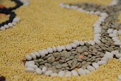 IMG_5426 (640x427) (sproutsprout67) Tags: lentils rangoli cityplot reclaimtheseeds linekeberg