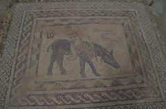 imgp3882 (Mr. Pi) Tags: ruin morocco volubilis archaeologicalsite