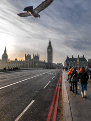 The Bridge (Le monde d'aujourd'hui) Tags: bridge london westminster seagull bigben westminsterbridge