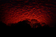 This morning (Matt West) Tags: morning trees red sun silhouette clouds forest sunrise am woods haiku fluffy altocumulus