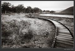 IMGP6789-Edit (Schleiermacher) Tags: california monochrome landscapes blackwhite centralcoast pentaxart pentaxk5