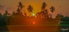Sunset (ajanth.v) Tags: trees sunset orange plants green landscape evening nikon coconut outdoor srilanka jaffna d7100 18140mm