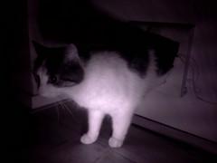 20160208-235524-i-1 (Catflap central) Tags: camera dog pet cats woof cat pi raspberry meow doggie catdoor catflap kattenluik katzenklappe catflapj2nnl taggingasdoguntilautotagginghasanoptout robotaggingisthedevil