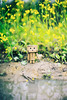 danboard in canola flower (siuba) Tags: flower hongkong 香港 canola 油菜花 danboard 紙箱人 阿楞 siuba tobylo