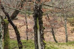 Green Tree (jonnyhodges164) Tags: greentree