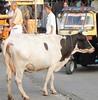 Calikut street (bokage) Tags: street india cow kerala calicut kozhikode bokage