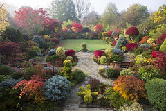 Autumn sunrise after mist (Four Seasons Garden) Tags: york uk flowers blue autumn red england colour green english leaves yellow stone garden four japanese maple seasons award foliage national begonia paving deciduous winning walsall 2015 yorkstone acers