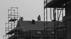 Tilers (brandsvig) Tags: roof bw work march skne workers sweden tiles sverige malm arbete tak 2016 augustenborg samsungs4