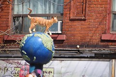 It's a Cat's World (Quistian) Tags: street urban toronto cat canon rps kensington 2016 t5i 201604 20160415