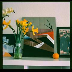 Life meets Art (alex.vaughn90) Tags: flowers stilllife berlin 120 film yellow mediumformat germany europe indoor oldschool scan pentacon six e6 diafilm pentaconsix colorpositive