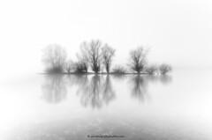 Zwarte Schaar in the Mist (Sander Grefte) Tags: longexposure trees blackandwhite mist tree misty river landscape bomen zwartwit boom le ijssel landschap zwarte mistig schaar langebelichting sandergreftephotoscom