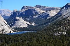 Persistence of life (Coquelicot40) Tags: california lake forest montagne landscape lac yosemite paysage foret parc montain californie etatsunis