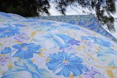 Flowers in the wind (Billy Vasco) Tags: street travel cuba poetic fujix100t