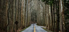 A drive through Great Smoky Mountains National Park (plottsdaniel) Tags: road trees landscape landscapes nationalpark woods nikon tn tennessee gatlinburg nikkor dslr backroads greatsmokymountains greatsmokymountainsnationalpark gsmnp gatlinburgtn landscapephotography dslrs d7100 nikond7100 usinterior roadslikethese friendsoftheamokies