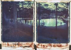 Quiet down (Maija Karisma) Tags: nature collage polaroid diptych instant expired pola expiredfilm peelapart polaroid180 iduv littlebitbetterscan