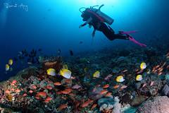 Colorful (Randi Ang) Tags: bali canon indonesia photography eos underwater angle wide dive scuba diving fisheye ang 15mm nusa randi 6d toya nusapenida penida pakeh