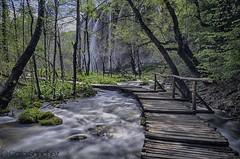 Plitvice Lakes River (cashacker1980) Tags: naturaleza lake planta nature water rio ro river de puente waterfall agua croatia paisaje bosque rbol aire croazia libre croacia senda arroyo corriente cascada plitvice
