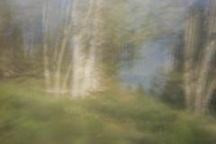 Mount Talbert (Tony Pulokas) Tags: blur tree oregon forest portland spring oak pinhole motionblur camerashake mttalbert oregonoak intentionalcameramovement mounttalbert mounttalbertnaturepark