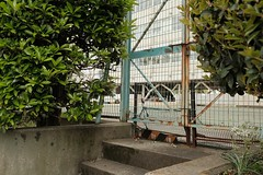 DSCF1966 (keita matsubara) Tags: japan  saitama urawa