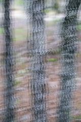 (Casey Lombardo) Tags: trees plants weird multipleexposure treetrunk trippy plantlife tripleexposure keystoneheights keystoneheightsfl