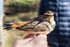 Birds (Mito Fierro) Tags: españa palencia fuentesdenava