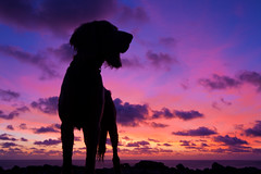 Purple Haze (Edd Ward) Tags: blue sunset orange dog pet pets sun color colour dogs nature silhouette clouds canon landscape cornwall purple outdoor dusk canine 7d 1022mm