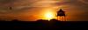 here comes the sun (Bec .) Tags: ocean light reflection bird beach beautiful canon inflight sand seagull dunes silhouettes adelaide bec southaustralia shrubs 1022mm georgeharrison watchhouse herecomesthesun 450d sempahore