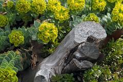 P4280002B (The Real Maverick) Tags: toronto ontario canada highpark outdoor torontoparks olympusstylus1