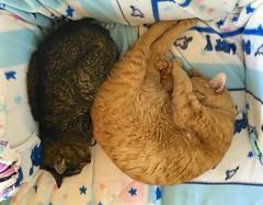 cats rufus littledoglaughedstories shotoniphone6s