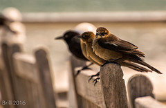 """Spotted By The Paparazzi"" (nywheels) Tags: nature birds bench bokeh finch virginiabeach"