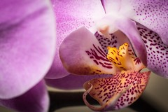 Orchids www.VictorRoblesPhotography.com #VictorRoblesPhotography  #Orchid #Orchids #Orchidea #Flower #Flowers #FlowerPower #FlowerMagic (VRoblesPhoto) Tags: flowers orchid flower orchids flowerpower orchidea flowermagic victorroblesphotography