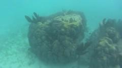 pennekamp_02 (ericvdb) Tags: statepark snorkeling floridakeys keylargo johnpennekamp