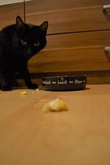 Samanta - 10.01.2015 (GoldstadtTV) Tags: pet black cat essen eat katze schwarz samanta fressen  schwarze