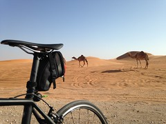 Specialized Tarmac and camels, Al Ain, UAE (Patrissimo2016) Tags: bicycle tarmac desert camels roadbike specialized