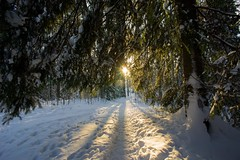 Pathway to light (m2onen) Tags: winter sun sunlight snow cold forest espoo finland lens snowy path sony pancake ultrawide pathway nex5 vclecu1 sel16f28