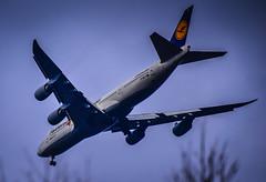 Lufthansa Fanhansa Boeing 747-8 approaching Washington Dulles Airport Chantilly VA (mbell1975) Tags: airplane washington airport dulles iad jet va lh boeing airlines lufthansa 747 jumbojet airliner jumbo approaching chantilly 7478 fanhansa
