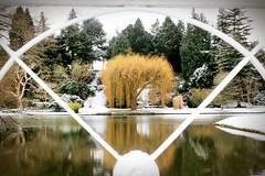 #Karlsaue #Kassel herrliche #Winterlandschaft und #spiegelung im #see bzw #teich von #tempel und #trauerweide (sweenky) Tags: see teich spiegelung kassel tempel winterlandschaft trauerweide karlsaue