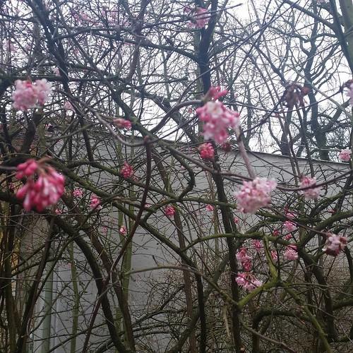 I v únoru bují Květy